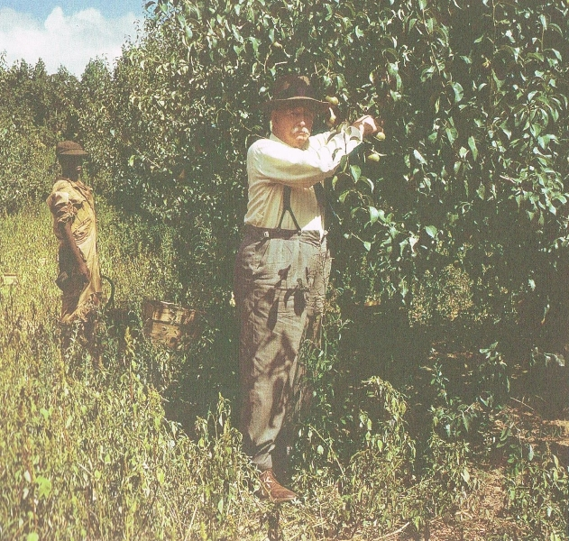harry-molteno-in-orchards-in-old-age