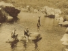 ted-molteno-right-w-jervis-molteno-kathleen-murray-swimming-in-bains-kloof-jan-1917