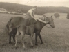 iona-murray-as-a-little-girl-riding-bareback-on-painswick-farm-c-1930