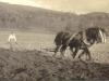 margaret-molteno-ploughing-w-prince-and-nancy-glen-lyon-1916