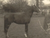 margaret-murray-nee-molteno-arab-horsebreeder-painswick
