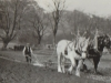 ploughing-match-duneaves-near-glen-lyon-1913
