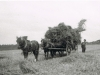 parklands-bringing-in-the-hay-with-horse-and-cart-before-the-1920s