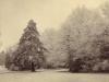 boyle-farm-thames-ditton-a-rare-hoar-frost-mid-1890s