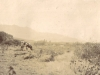 elgin-before-the-days-of-intensive-fruit-farming