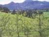 glen-elgin-spring-blossom-on-apple-trees