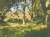 glen-elgin-ted-harrys-new-house-post-1925