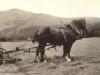 glen-lyon-farming-nancy-prince-at-work-1916