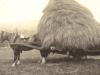 glen-lyon-farming-prince-with-hay-lifter-1916