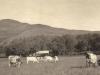 glen-lyon-farming-the-cows-at-work-1916