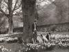 glen-lyon-fiona-molteno-w-the-dogs-spring-1952