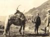 glen-lyon-jervis-molteno-edmund-fergussons-stag-early-1920s