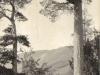 glen-lyon-view-through-the-scotch-firs-1913
