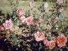lolomarik-roses-for-which-it-is-famous