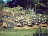 lolomarik-roses-in-the-garden