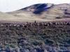 marania-sheep-need-shepherds
