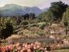 marania-the-garden