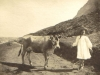 millers-point-probably-cow-blocking-the-track-to