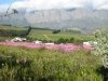 hottentots-holland-mountains-today