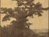 inanda-the-tree-where-rev-lindley-preached-in-1847