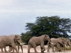 kenya-elephants-on-their-way