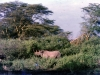 kenya-thick-bush-typical-of-some-parts