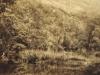 tsitsikama-forest-near-knysna-c-1914