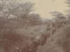 ox-wagon-transport-in-kenya-tough-going